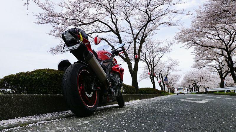サクラ Bmw S1000r BMW Motorrad