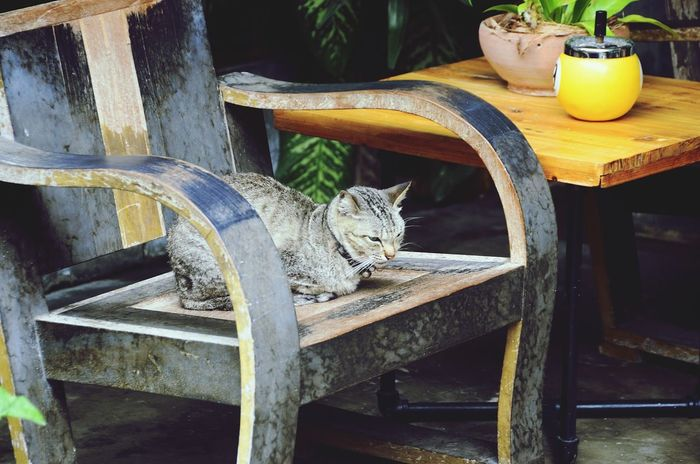 """""""A Special Guest"""" Cat Cheese! Cat♡ Cat Lovers Cats Cats Of EyeEm Meow Animal Themes Hello World EyeEm Best Shots Pet Relaxing"""