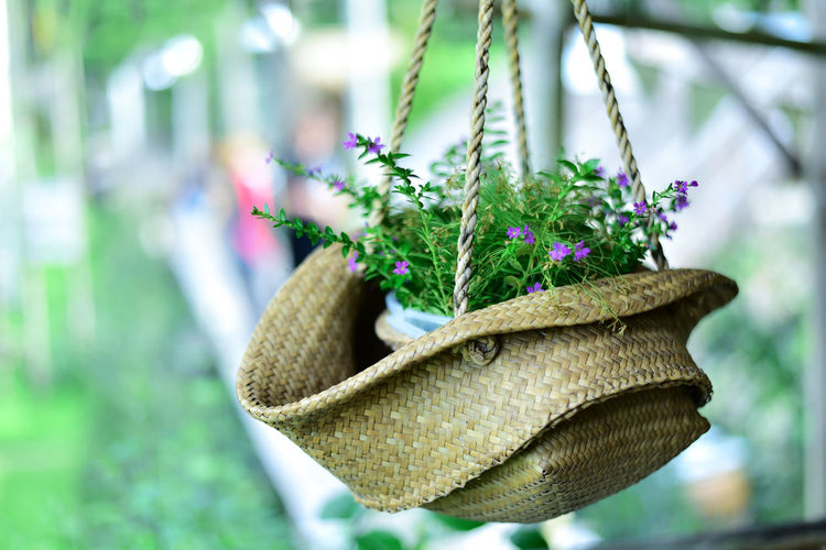 Close-up of potted plant hanging in straw hat