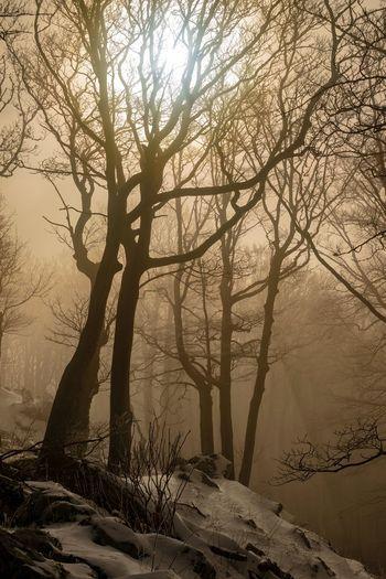 Misty forest. Tree Branch Fog Sunlight Foggy Tranquil Scene Snowcapped Woods Idyllic Calm Non-urban Scene