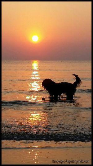 Bentjesgosaugustin Dog Holidays Mydog