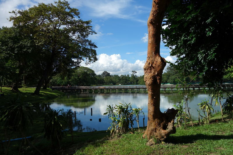 Kandawgyi Park Yangon Beauty In Nature Grass Kandawgyi Lake Myanmar Nature Park Reflection Scenics Sky Tranquil Scene Tranquility Tree Tree Trunk Water