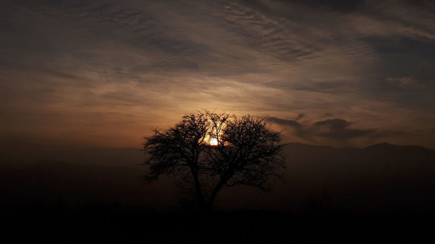 Fog Tree In Fog Mountains Susnset Tree Sunset Tree Sunset Silhouette Outdoors No People Beauty In Nature Nature Sky Night