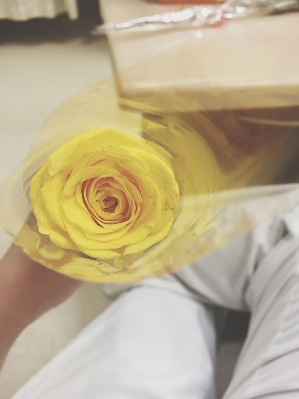 rose - flower, yellow, flower, close-up, freshness, flower head, indoors, fragility, one person, day, people