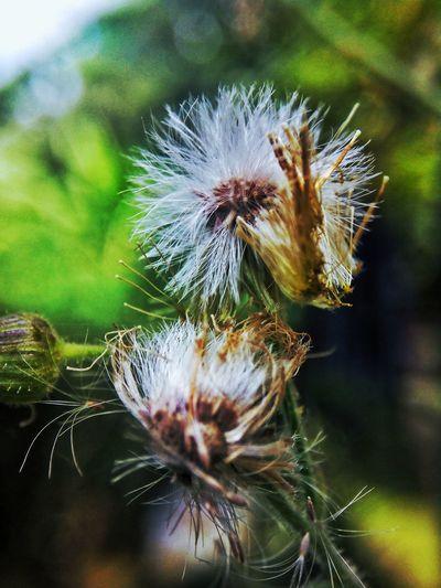Makro Photography Supermakro Flora Superbokeh Bokeh Photography White Flower Plant Nature Outdoors