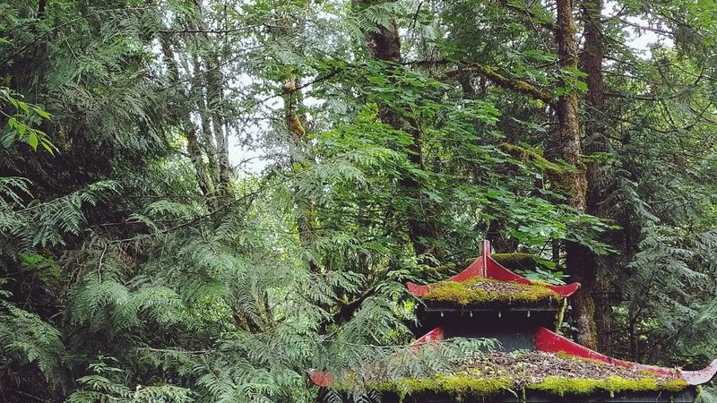 Pagoda Red Rooftop Forest Trees Verdant Abundance