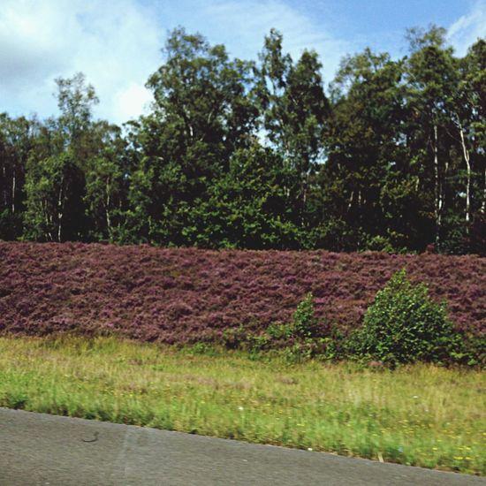 EyeEm Nature Lover Nature Flouers Landscape