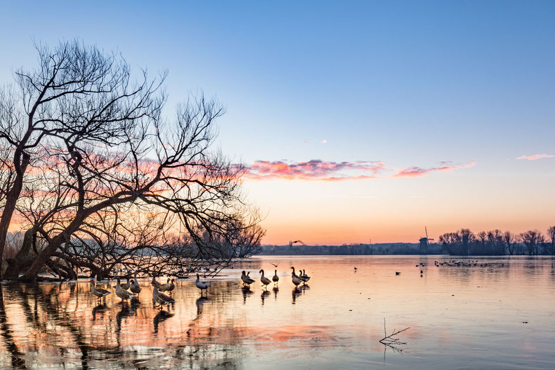 Geese on frozen lake against sky