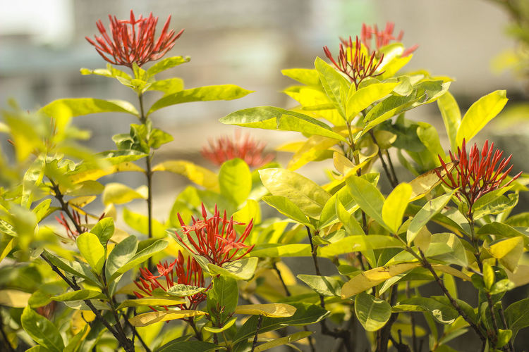 red flower Growth Plant Beauty In Nature Close-up Leaf Flower Plant Part Flowering Plant Green Color Yellow Freshness Nature No People Day Selective Focus Vulnerability  Fragility Outdoors Focus On Foreground Flower Head