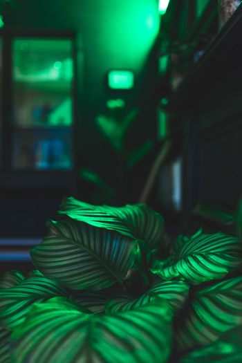 Plant Absence Chair Close-up Domestic Room Focus On Foreground Furniture Green Green Color Home Interior Illuminated Indoors  Leaf Night No People Pattern Plant Part Potted Plant Rope Seat Selective Focus Still Life