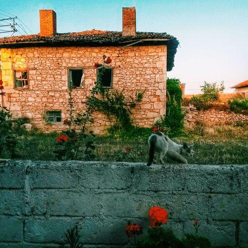 Village Cat Old VSCO