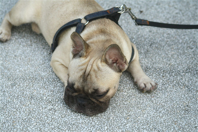 Dog Resting On Ground