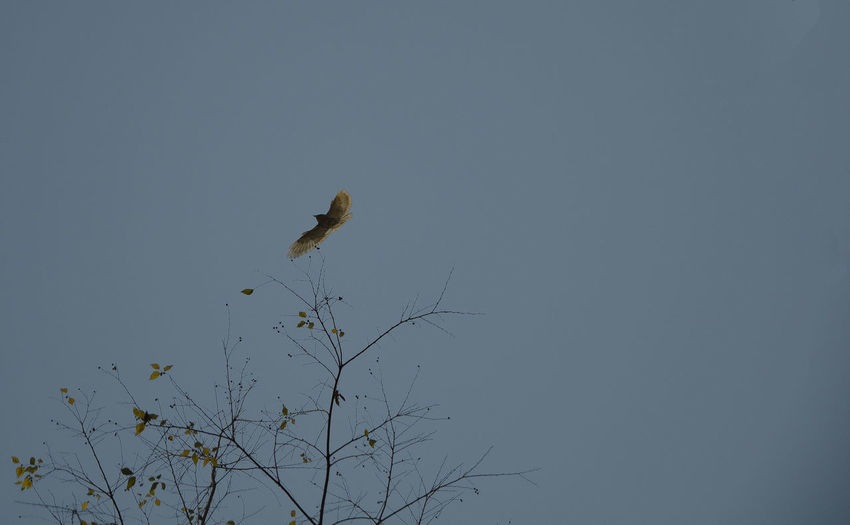 Bird perching on branch against clear sky