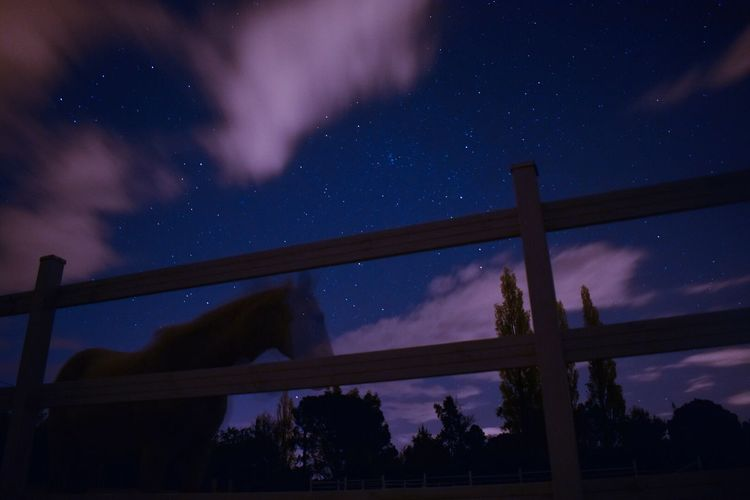 Low angle view of silhouette horse at stable against star field