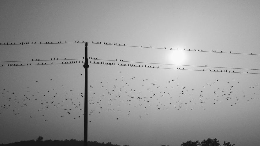 Flock Of Birds Flying Bird Outdoors Nature Hellowinter Flyaway Lost In The Landscape Be. Ready. Black And White Friday Autumn Mood