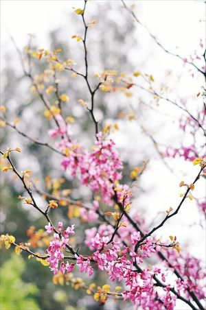 Blossom 🌿 Flower Pink Color Tree Blossom Springtime Nature Beauty Growth Freshness Plant Outdoors Beauty In Nature Spring Picoftheday Phootooftheday Photography Flowers Flower Photography Pink Green Good Bestoftheday Best  Oldiesbutgoldies EyeEmNewHere