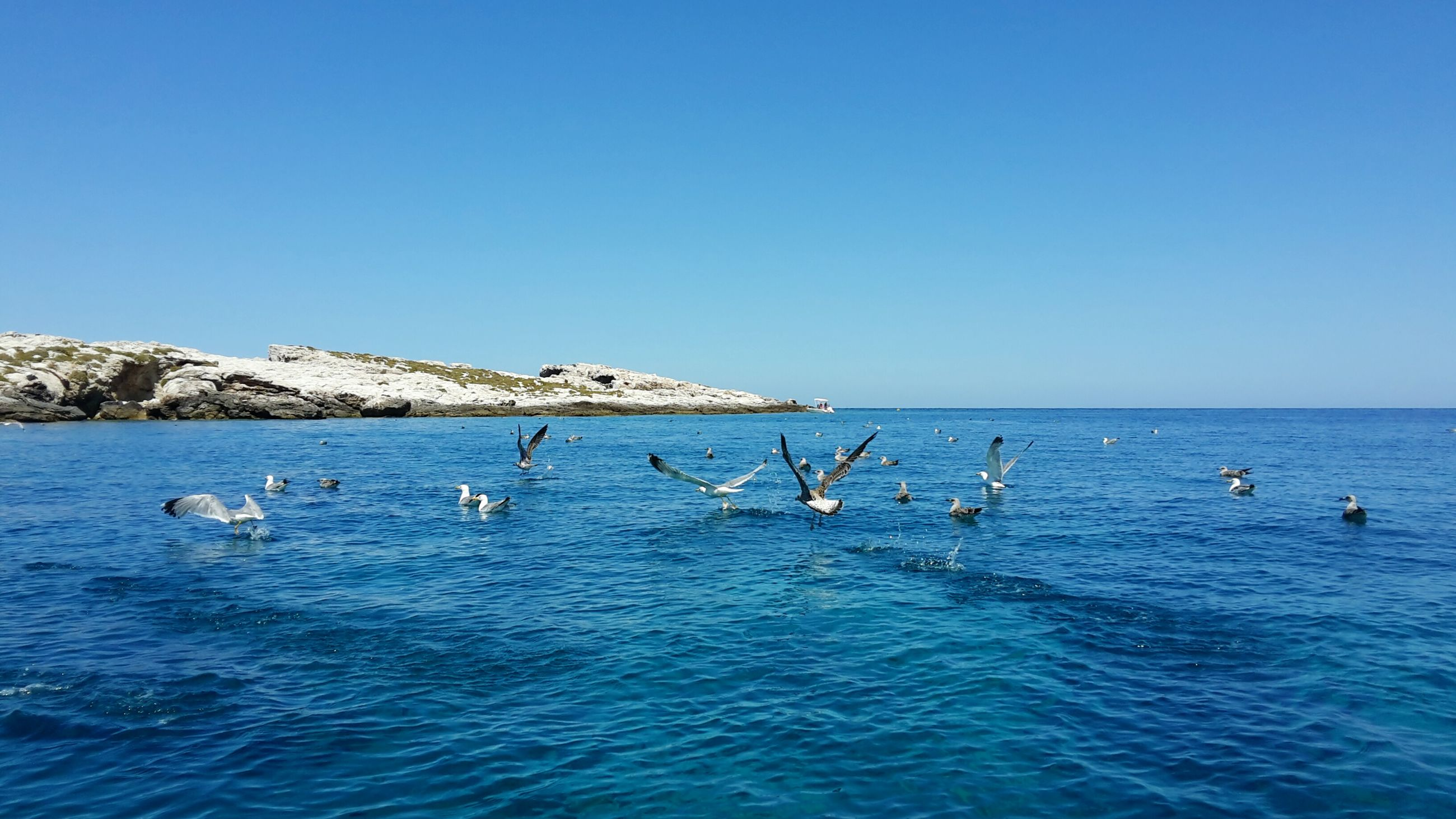 water, sea, clear sky, blue, waterfront, copy space, beauty in nature, nature, scenics, bird, horizon over water, animal themes, tranquility, swimming, tranquil scene, wildlife, animals in the wild, rippled, day