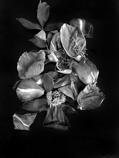 Black Background Flower Head Flower Perfume Close-up Vase Petal Orchid Rosé Blooming Perfume Sprayer