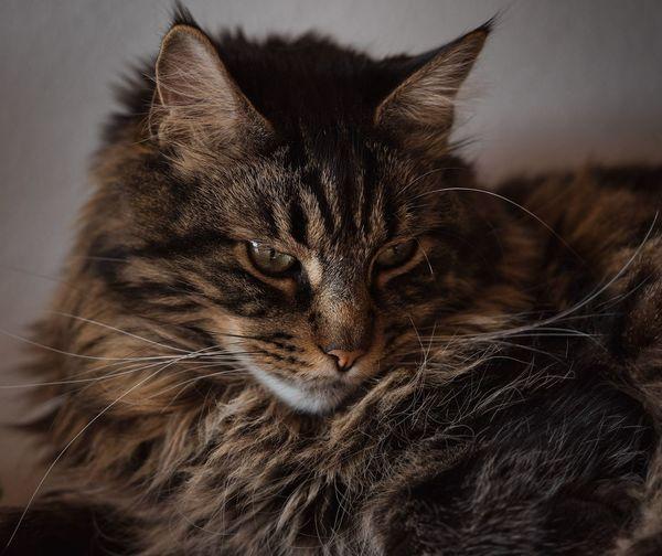 #cat Katzenfoto