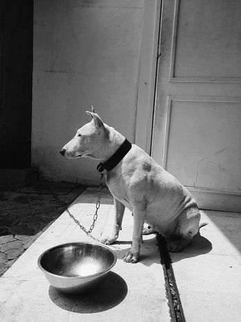 What Who Where One Animal Waiting For Food Afterbath Animal Themes Pets Black And White Friday