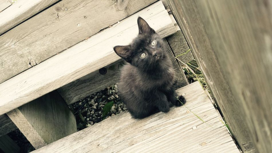 Animal Animal Hair Animal Head  Animal Lover Animal Photography Animal Themes Black Cat Black Cat Photography Black Cats Casual Clothing Cat Cats On Stairs Domestic Animals Domestic Cat Feline Green Color Looking At Camera Mammal One Animal Pets Plank Stray Cat Whisker Wooden Zoology