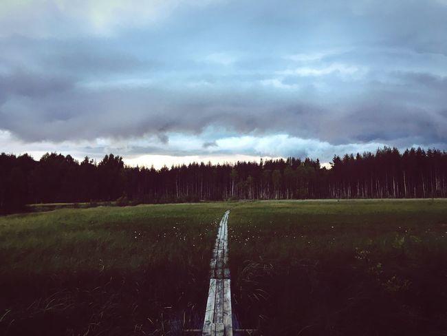 Luleå  Sweden Northern Sweden Mire Wodden Footbridge Bridge Nature Nature_collection Nature Photography Naturelovers Bestoftheday Picoftheday EyeEm Nature Lover IPhone EyeEm Best Shots IPhoneography EyeEmBestPics IPhone SE
