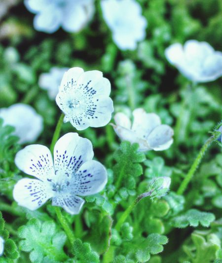 Flowers Flower Flowerporn Flowers,Plants & Garden Nature 花 自然 花と庭 In My Garden My Garden