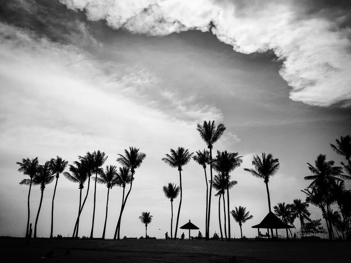 Singapore Beach Beauty In Nature Blackandwhitephoto Cloud - Sky Day Growth Hotday Nature No People Outdoors Palm Tree Scenics Sea Sentosaisland Sky Sunnyday Tranquil Scene Tranquility Tree