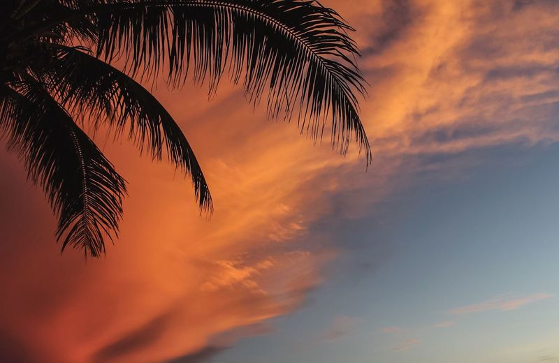 Low Angle View Of Palm Tree Against Sunset Sky