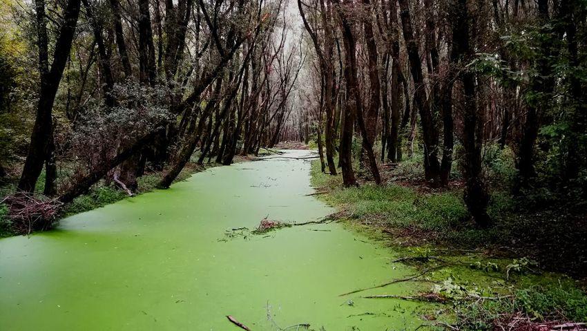 Tree Water Nature Lake Green Nature Swamp Grass