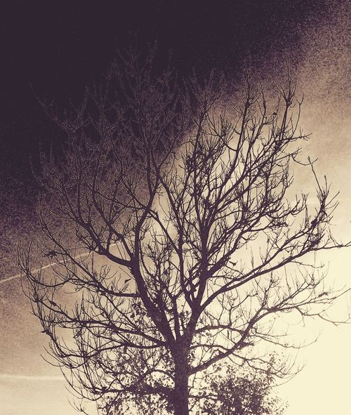 Plants Playing With Filters Filter Effects TreePorn Tree Art Tree_collection  Litography