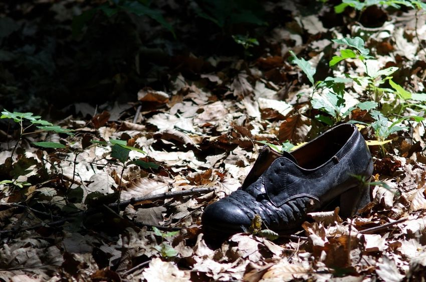 Abandoned Alone Autumn Black Cipő Desolate Erdő Fall Forest Green Hungary In Forest Light No People Old Outdoors Petertomcsanyi Shadows Shoe ősz