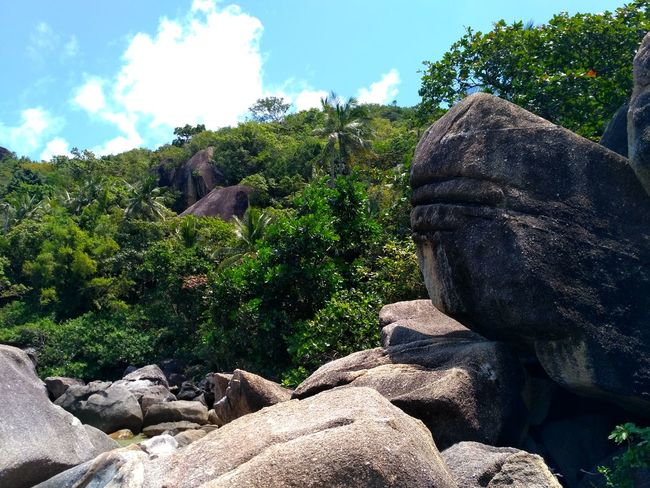 Ko Samui, Thailand Nature No People Outdoors Day Growth Sky Beauty In Nature Tree Close-up Mountain Scenics Plant Beauty In Nature Cloud - Sky Landscape Tranquil Scene Nature Pine Tree Tranquility Stone Rocky Mountains Rock - Object