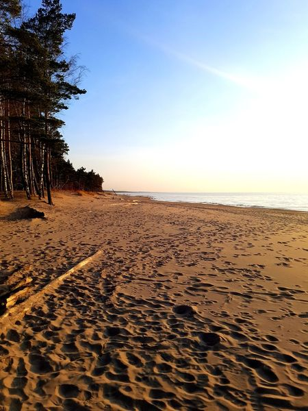 Pine Tree The San Sanset Rampage  Water Sea Beach Sunset Sand Tree Sand Dune Sky Horizon Over Water Landscape