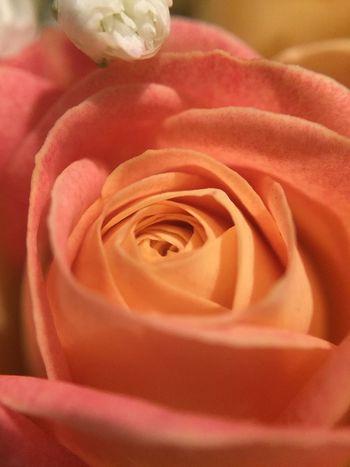 Macro_collection Flowers Flowers,Plants & Garden EyeEm Nature Lover