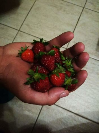 Human Hand Healthy Lifestyle Fruit Red Holding High Angle View Handful Strawberry Close-up Food And Drink Vegan