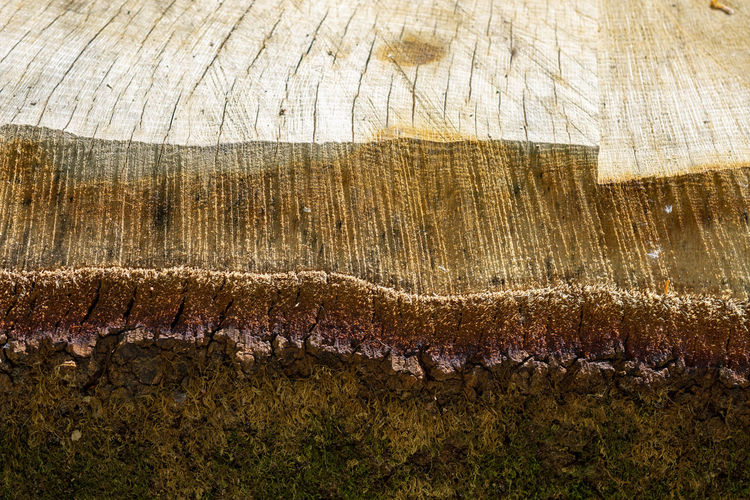 Tree Ring Land Bark Natural Pattern Rock - Object Tree Stump Tree Geology Wood Outdoors Pattern Close-up Rough Day Nature Brown Wood - Material Backgrounds No People Textured  Full Frame Cut