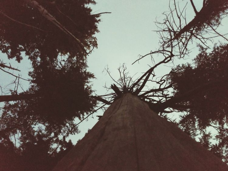 Tree Low Angle View Silhouette Branch Day No People Tree Trunk Nature