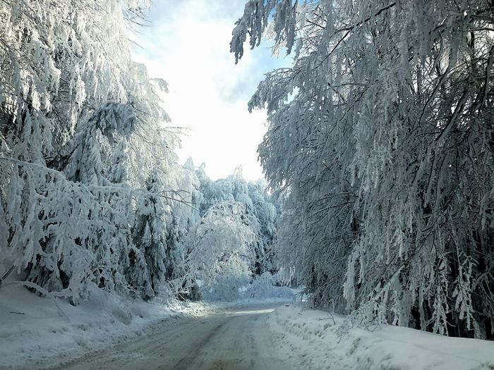 Tree Nature Plant Day Snow Cold Temperature Sky Beauty In Nature Frozen Winter Outdoors