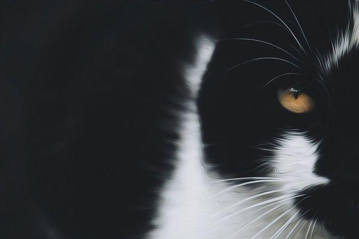Cut Pets Siyah Kitten Kedi Cute Cats Benimgözümden Animals Tgif_features Bir_dakika Bugununkaresi
