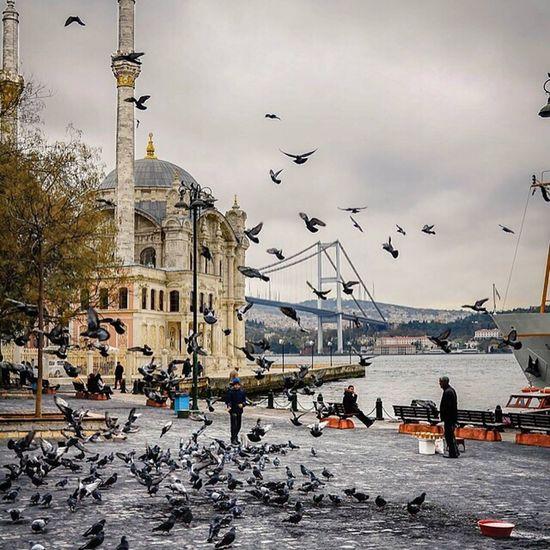 Turkey Istanbul Istanbul Turkey Beautiful Vscocam EyeEm Best Shots EyeEm Around The World Architecture Photography Architectural Feature Architecture Details Ancient Historic Eyemphotography EyeEm Gallery EyeEm