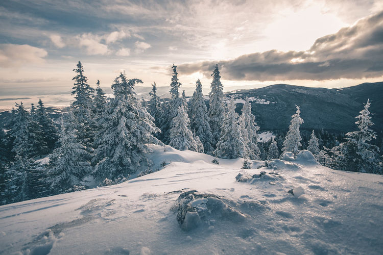 Beauty In Nature Cloud - Sky Cold Temperature Covering Day Environment Landscape Mountain Nature No People Non-urban Scene Outdoors Plant Scenics - Nature Sky Snow Snowcapped Mountain Tranquil Scene Tranquility Tree Winter