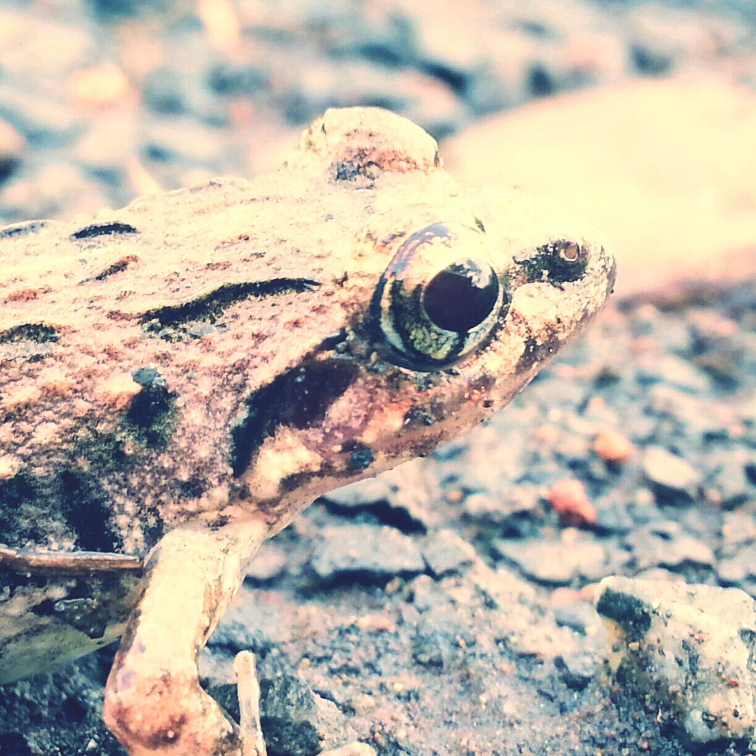 close-up, focus on foreground, metal, rusty, one animal, outdoors, animal themes, day, rock - object, metallic, no people, old, weathered, sunlight, nature, abandoned, part of, animals in the wild, damaged, reptile