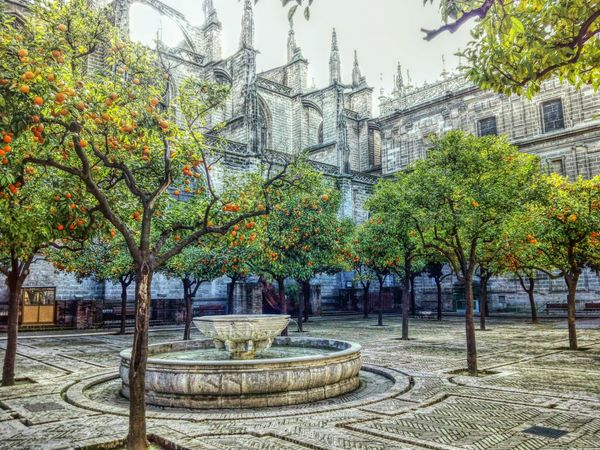 Seville Seville's Cathedral Spain ✈️🇪🇸 Espagne España EyeEmBestPics EyeEm Best Shots Eye4photography  EyeEmBestEdits Spain♥ Spanien Chatedral Andalucia España SPAIN View Oranges Winter Trippy Enjoying Life España🇪🇸 Andalusia Andalucía