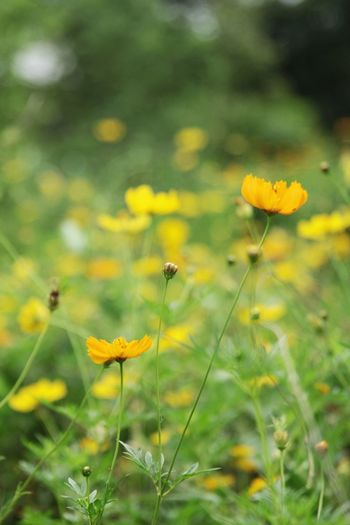 Flower Head Flower Yellow Uncultivated Summer Petal Insect Black-eyed Susan Wildflower Meadow Flowering Plant Plant Life