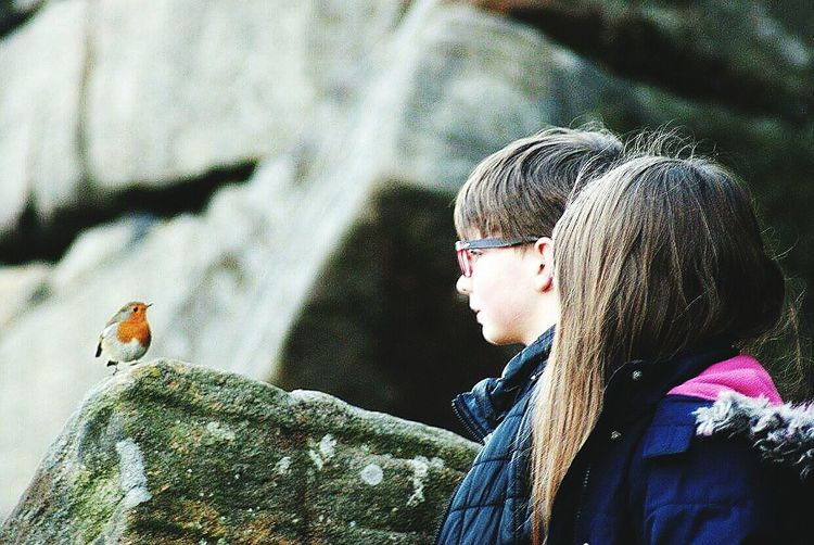 Rock n Robin Robin Redbreast Bird Photography Birds_collection Sayhello Pleasedtomeetyou Countryside Beauty In Nature Red Stanageedge Nature Kids Photography PeakDistrict Derbyshire