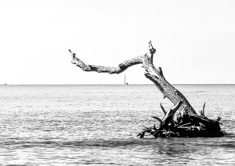 Driftwood in sea against clear sky