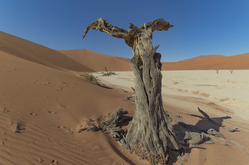 Arid Climate Atmospheric Clear Sky Climate Day Dead Plant Desert Driftwood Environment Land Landscape Namibia Desert Nature No People Non-urban Scene Outdoors Remote Sand Sand Dune Scenics - Nature Sky Sunlight Tranquil Scene Tranquility