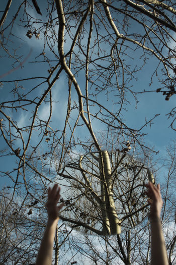 Tree Human Body Part Plant Hand Human Hand Sky Nature Branch Body Part One Person Real People Low Angle View Day Outdoors Bare Tree Unrecognizable Person Human Arm Human Limb Arms Raised Hand Raised Capture Tomorrow EyeEm Best Shots Eye4photography  EyeEm Gallery