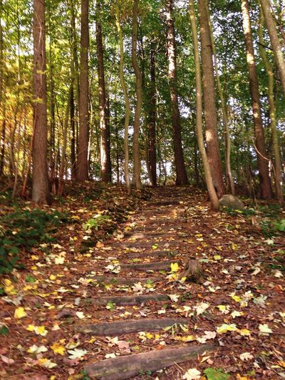 Beatiful forest in Denmark 🌲